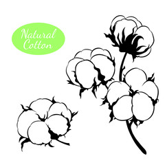 Vector set of cotton plant. Branch with flowers.