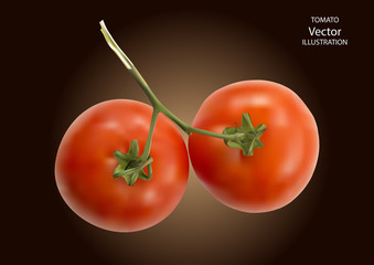 Vector illustration of big ripe red fresh tomatoes isolated on a dark background