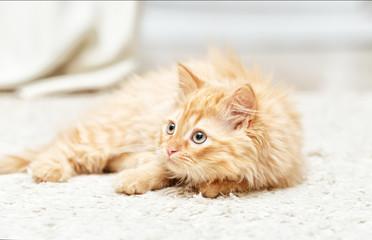 .red kitten lies on a white carpet