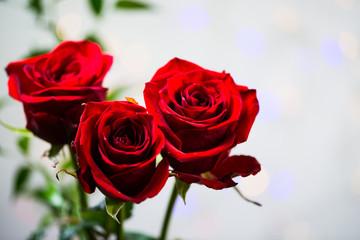 Red Roses - valentine