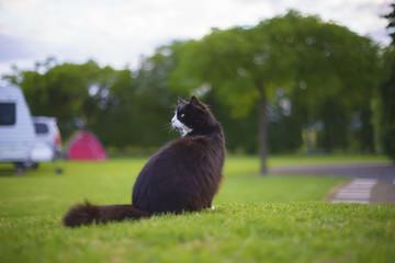 Cat at motor camp