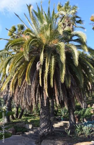 Variedades de cactus en el parque imagens e fotos de for Cactus variedades fotos