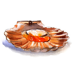 Raw open scallop, pecten, seafood, isolated, watercolor illustration, white background