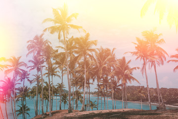 Palm trees on tropical beach, vintage toned and retro color stylized with light leaks