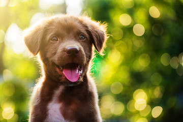 puppy portrait with bokeh