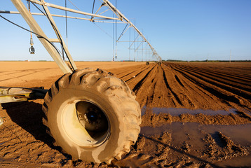 Modern Irrigation System at a Farm Field at Florida in Early Morning Sunlight. Florida ranked seventh in the U.S. for agricultural exports.