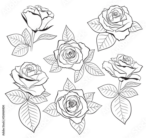 Vector Set Of Detailed Isolated Outline Rose Bud