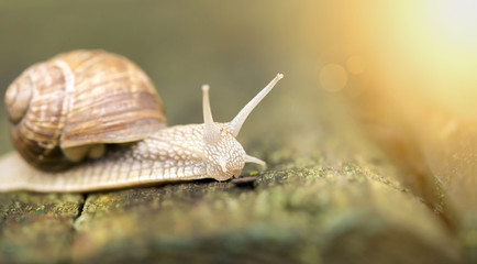 Website banner of a slow snail