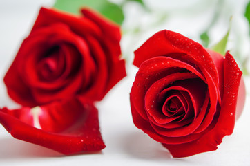 Red rose flowers with rose petals on white wooden background