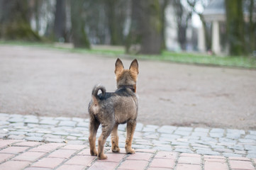 Little cute puppy in park