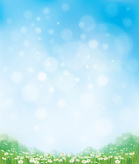 Vector summer nature  background, chamomiles field and  blue sky