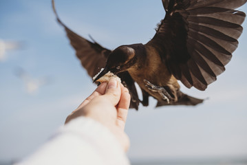 Cropped image of man feeding bird at beach