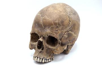 Human Skull over white