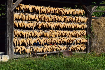 Corncobs on a Drying Rack, Slovenia
