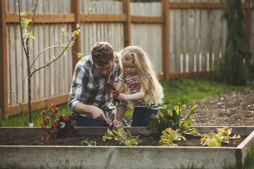 Father and daughter planting in raised bed at backyard