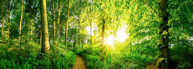 Wald im Frühling mit Sonne und Waldweg