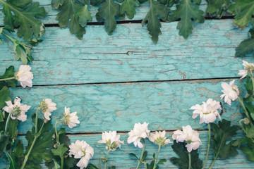 chrysanthemum flowers on blue boards