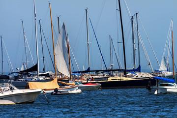 Catboat Sailing Through the Fleet Padnaram Harbor with Boats Dar