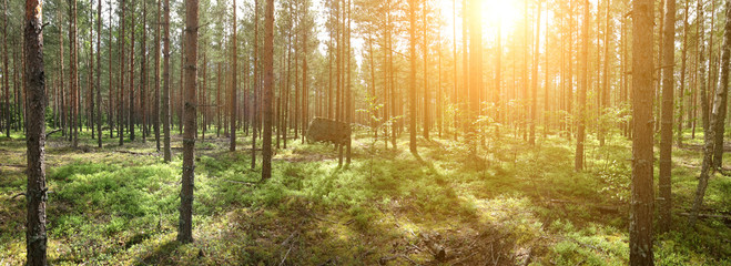Panoramic photo of summer forest