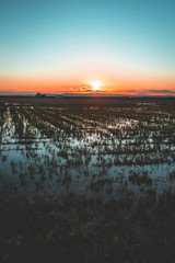 Scenic view of rice paddy field during sunset
