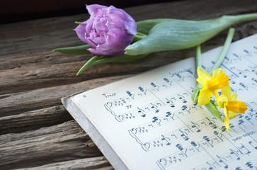 Sehr altes, handgeschriebenes Notenblatt mit lila Tulpe und Narzissen, Narcissus pseudonarcissus, Frühling, Ostern