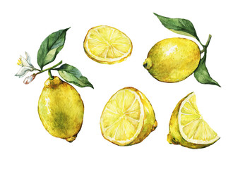 Set with whole and slice fresh citrus fruit lemon with green leaves and flowers. Hand drawn watercolor painting on white background.