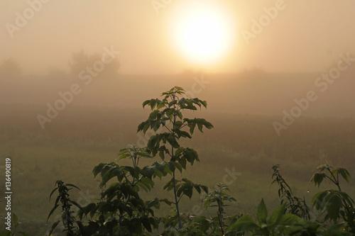"""Wastelands at velvet sunrise fog"""" Imagens e fotos de stock Royalty ..."""