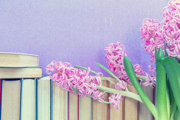 Many different books on violet wall. Flowers pink hyacinth. Cozy home concept.