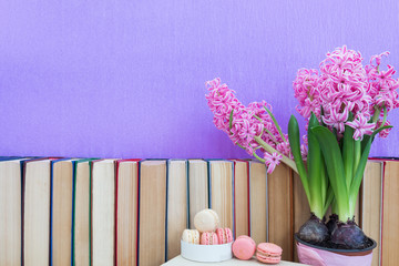 Many different books on violet wall. Flowers pink hyacinth. White and pink sweet delicious macaroons cake. Cozy home concept.