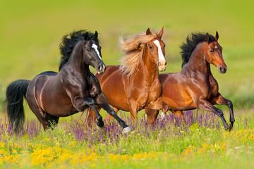 Konie biegają galopują w kwiat łące