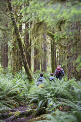 Hiking the temperate rainforest in British Columbia