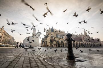 Obraz Piękny rynek z ptakami, Kraków, Polska - fototapety do salonu