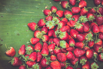 Fresh strawberries closeup. Strawberry red berry fruit from the