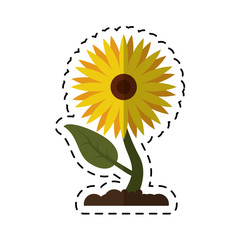 cartoon sunflower flora leaves icon vector illustration eps 10