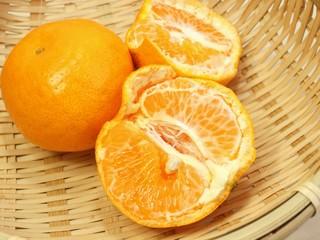 柑橘類のはるみ