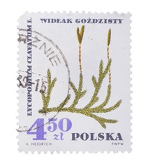 POLAND - CIRCA 1967: A stamp printed in  shows ground pine