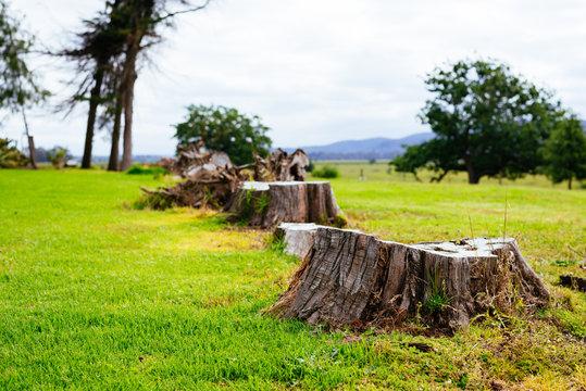 Stumps left on the ground after logging