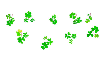 Different trefoil petals isolated on white background. St.Patric