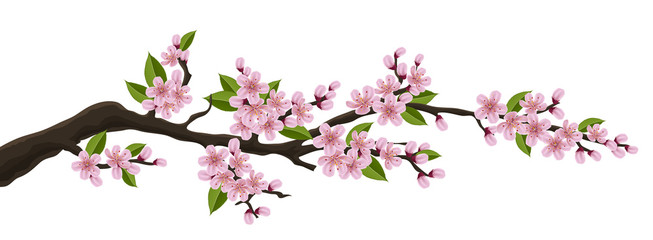 Cherry tree branch with pink flower and green leaf. Illustration for horizontal spring banner and design, isolated on white Fotoväggar