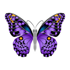 Bright beautiful purple butterfly. Vector illustration isolated.