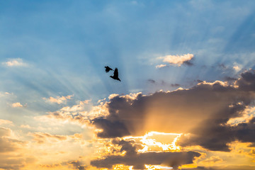 silhouette photo.bird flying  with sunset