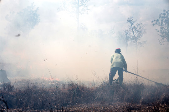 fire fighter working with wildfire
