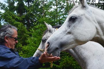 Man feeding horses