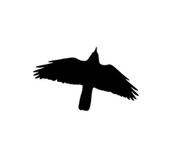 silhouette of a black crow on a white background