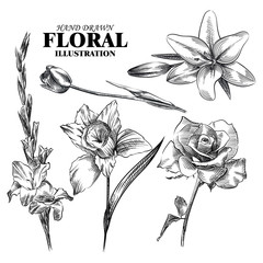 Set of hand drawn flowers isolated on white background. Tulip, lily, rose, narcissus, gladiolus sketches elements. Retro hand-drawn floral vector illustration.