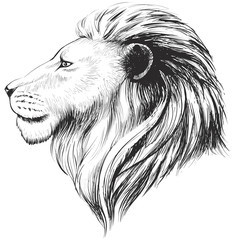 Vector lions head, illustration. Lion's hand drawn profile.