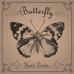 Butterfly isolated on the background texture of the old paper. Butterfly sketch elements. Retro hand-drawn vector illustration. Great for poster, banner, voucher, coupon.