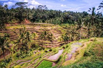 Terraced Rice Fields of Bali