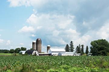 Cornfield and Farm