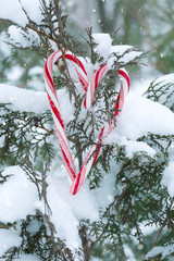 Candy cane heart on fir-tree branch